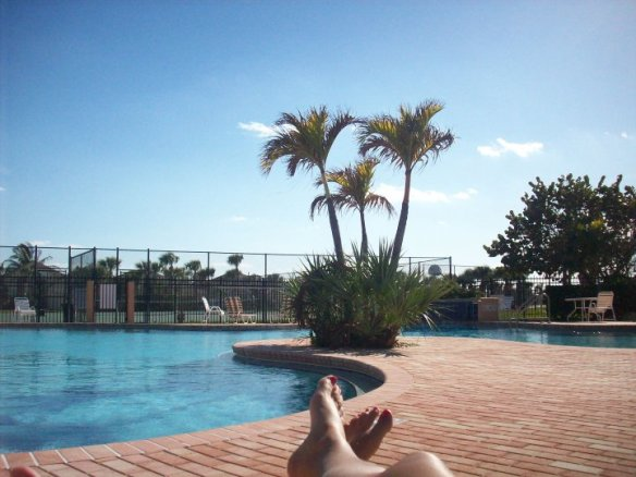 pool, Florida, palm tree, palm trees