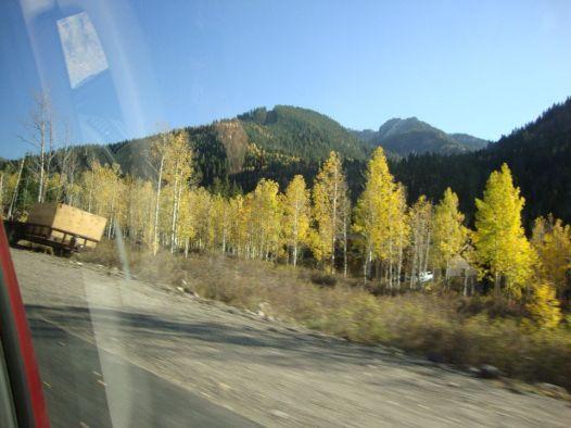 aspen trees salt lake city
