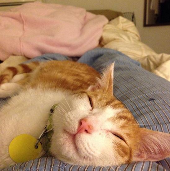 orange tabby, orange kitten, lazy cat, lazy kitten, sleeping cat