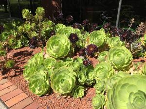 san francisco, sf succulents
